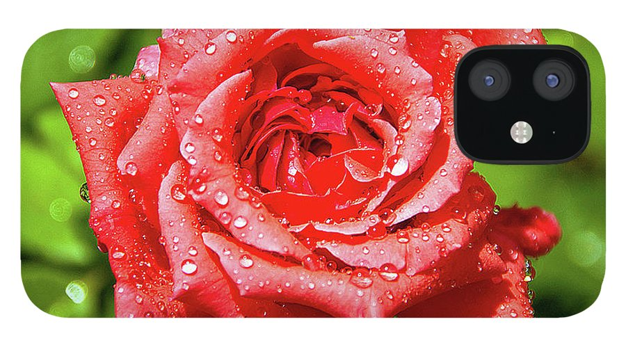 New Delhi IPhone 12 Case featuring the photograph Rose With Raindrops by Charlie Joe
