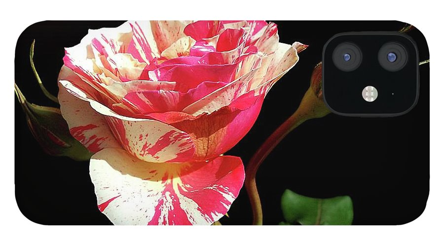Bud iPhone 12 Case featuring the photograph Rose With Two Buds by Gitpix