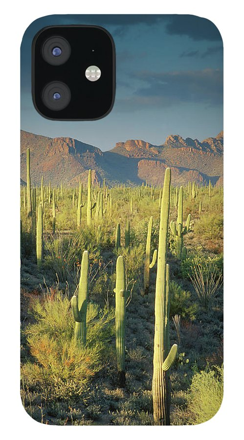 Saguaro Cactus IPhone 12 Case featuring the photograph Saguaro Cactus In Sonoran Desert And by Kencanning
