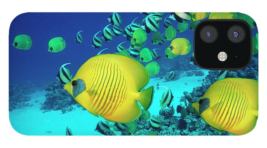 Underwater IPhone 12 Case featuring the photograph School Of Butterfly Fish Swimming On by Georgette Douwma