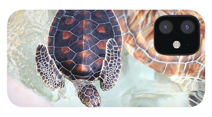 Underwater iPhone 12 Case featuring the photograph Sea Turtle by Alyssa B. Young