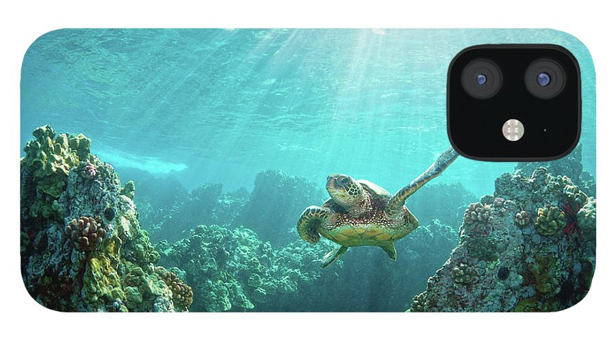 Underwater iPhone 12 Case featuring the photograph Sea Turtle Coral Reef by M.m. Sweet