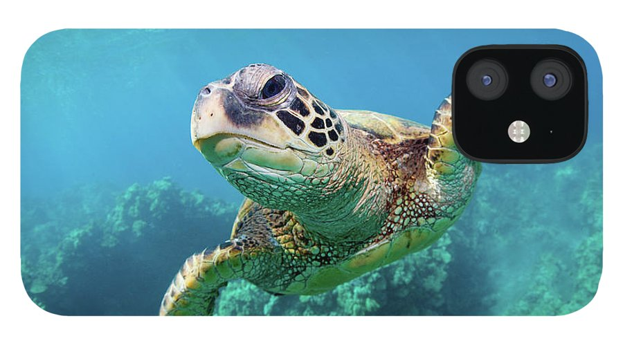 Underwater IPhone 12 Case featuring the photograph Sea Turtle, Hawaii by M Swiet Productions