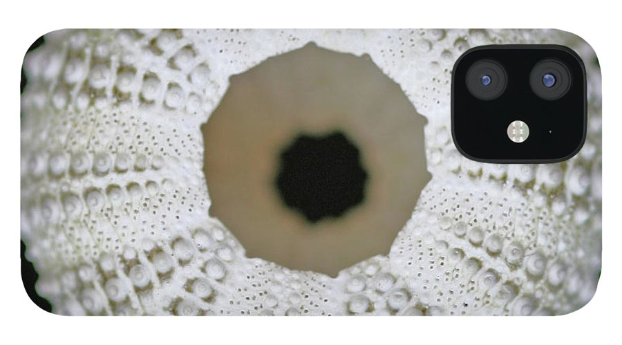 Empty IPhone 12 Case featuring the photograph Sea Urchin Shell by Photo By Jenny Walker.