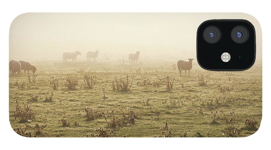Dawn IPhone 12 Case featuring the photograph Sheep Viewed On A Misty Morning by Travelpix Ltd