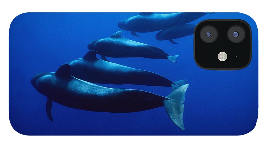 Underwater iPhone 12 Case featuring the photograph Short-finned Pilot Whales, Globicephala by Gerard Soury