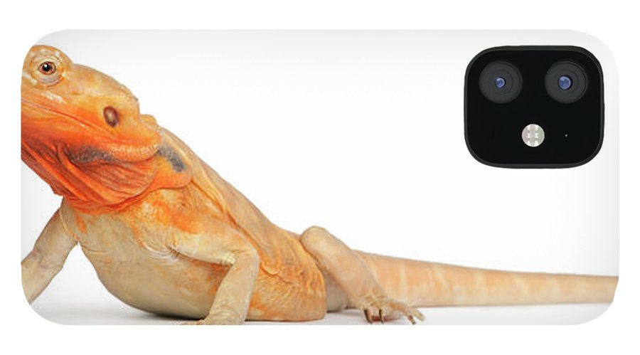 Belgium iPhone 12 Case featuring the photograph Silkbacks Scaleless Bearded Dragon by Life On White