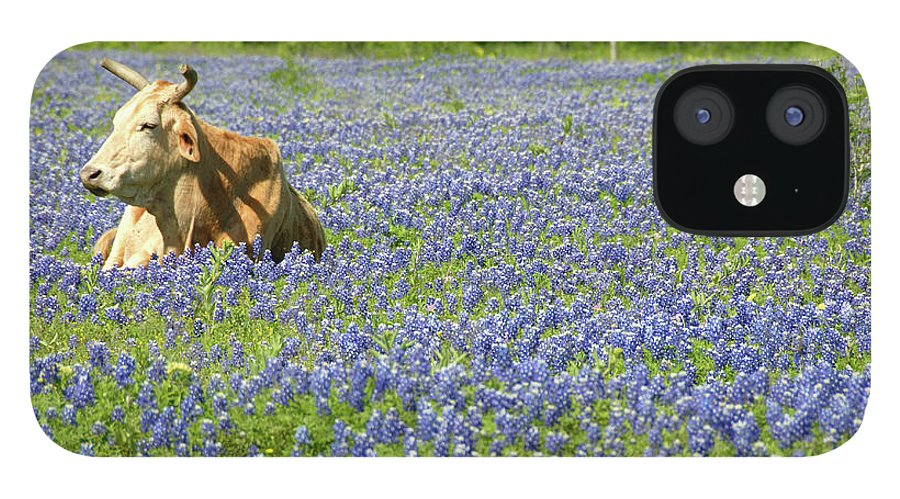 Cow IPhone 12 Case featuring the photograph Single Cow Resting In A Field Of Texas by Zview