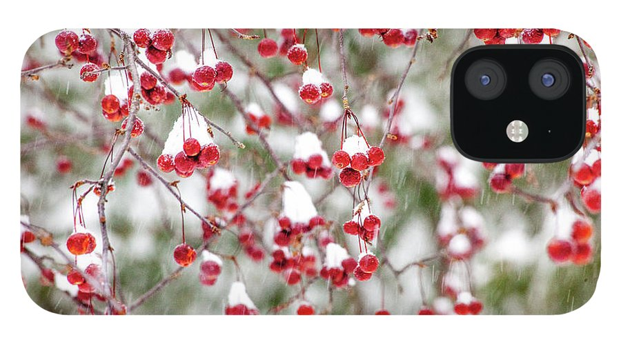 Winter IPhone 12 Case featuring the photograph Snow Covered Red Berries by Trevor Slauenwhite
