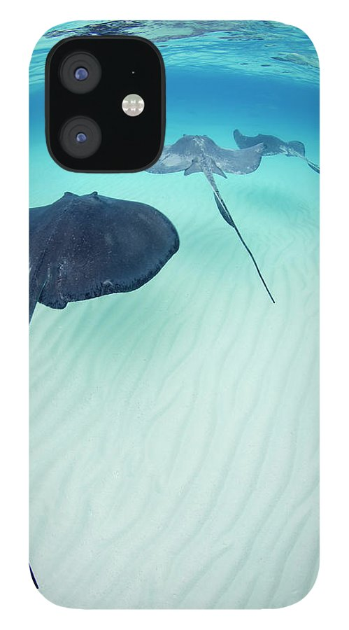 Underwater IPhone 12 Case featuring the photograph Southern Stingray Cayman Isalnds by Justin Lewis