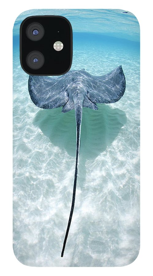 Underwater IPhone 12 Case featuring the photograph Southern Stingray Cayman Islands by Justin Lewis