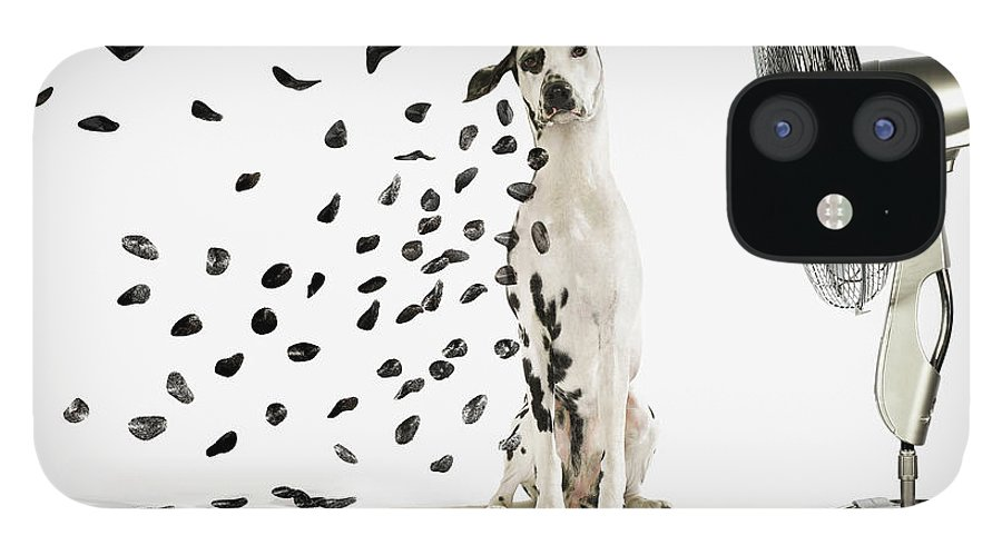 Pets IPhone 12 Case featuring the photograph Spots Flying Off Dalmation Dog by Gandee Vasan