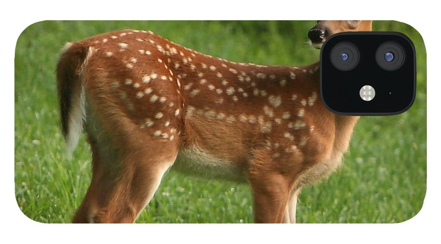 Grass IPhone 12 Case featuring the photograph Spotted Fawn by Spiraling Road Photography