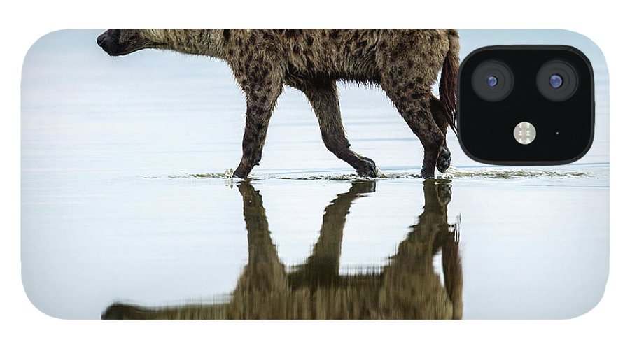 Kenya IPhone 12 Case featuring the photograph Spotted Hyena Looking For Weak Flamingos by Manoj Shah