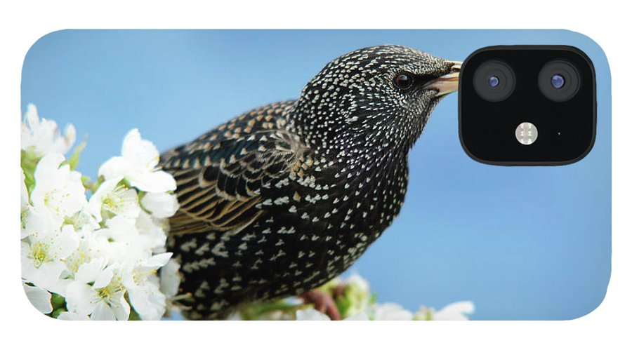 Songbird IPhone 12 Case featuring the photograph Star In Springtime by Schnuddel