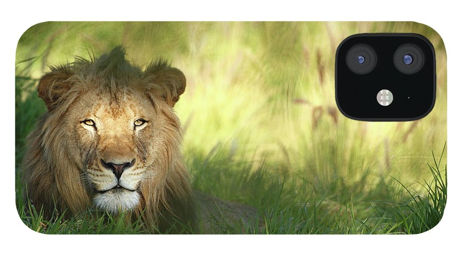 Tropical Rainforest IPhone 12 Case featuring the photograph Staring Lion In Field Of Grass With by Jimkruger