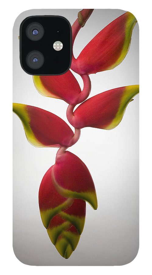 Hanging IPhone 12 Case featuring the photograph Studio Shot Of Hanging Red Lobster Claw by Design Pics/tomas Del Amo