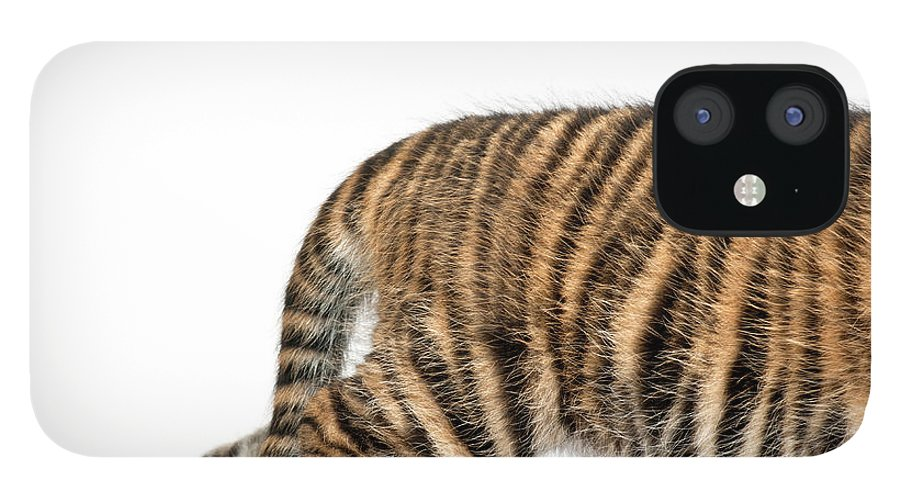 White Background IPhone 12 Case featuring the photograph Sumatran Tiger Cub - Panthera Tigris by Life On White