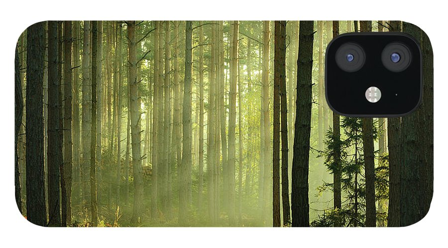 Scenics IPhone 12 Case featuring the photograph Sunbeams Breaking Through Pine Tree by Avtg