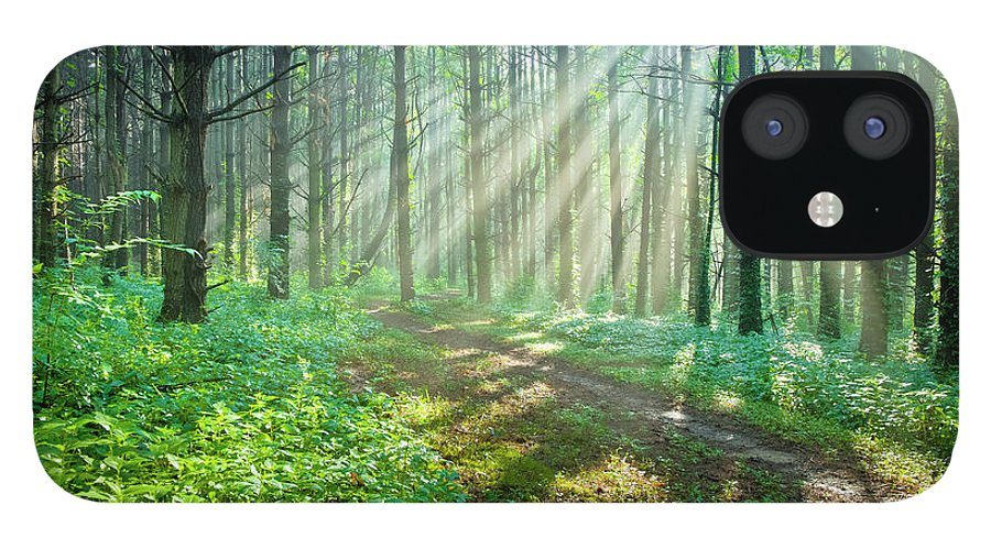 Outdoors IPhone 12 Case featuring the photograph Sunbeams Filtering Through Trees On A by Drnadig