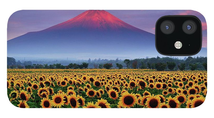 Tranquility IPhone 12 Case featuring the photograph Sunflower And Red Fuji by Katsumi.takahashi