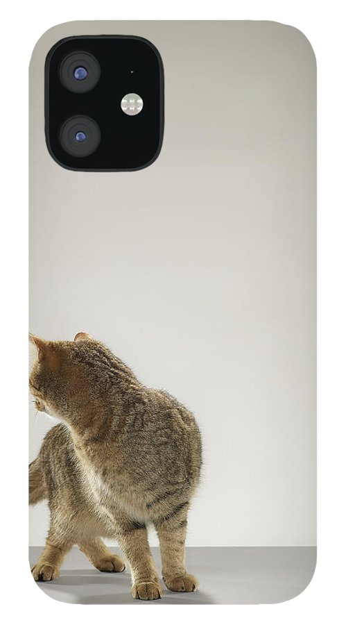 Pets IPhone 12 Case featuring the photograph Tabby Cat Looking Behind by Michael Blann