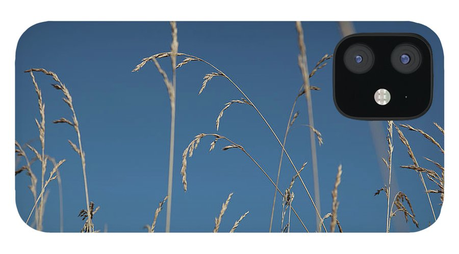 Tranquility iPhone 12 Case featuring the photograph Tall Grasses Swaying Against A Blue Sky by Lauren Krohn