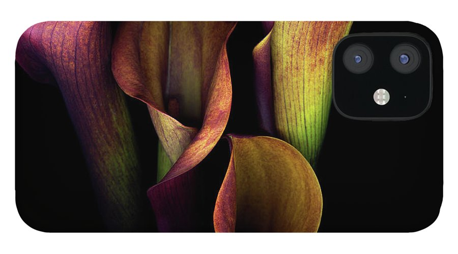 Calla Lily IPhone 12 Case featuring the photograph The Golden Curves And Chalices Of Callas by Photograph By Magda Indigo