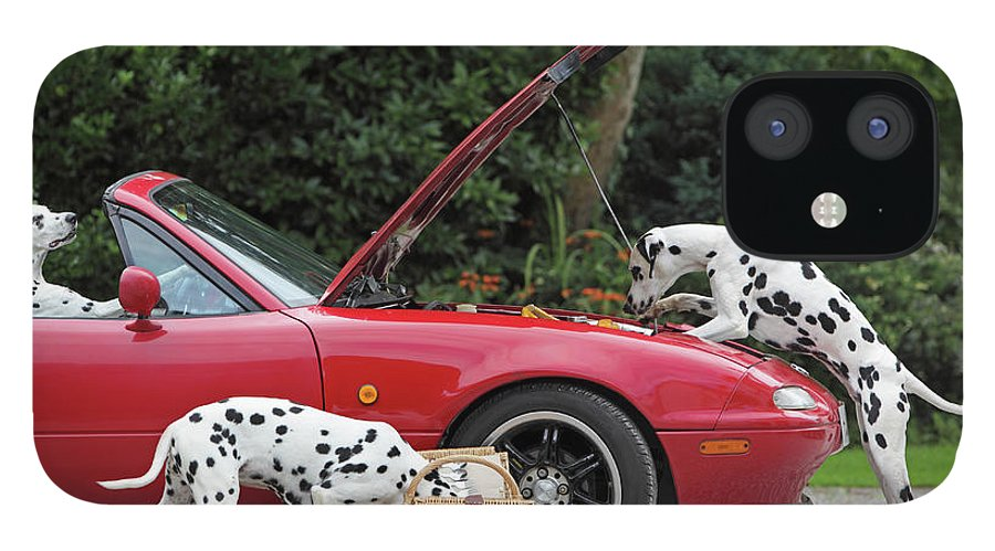 Pets IPhone 12 Case featuring the photograph Three Dalmatians Around Red Sports Car by Peter Cade