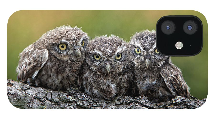 Bird Of Prey IPhone 12 Case featuring the photograph Three Grimly Goblins by Michael Milfeit