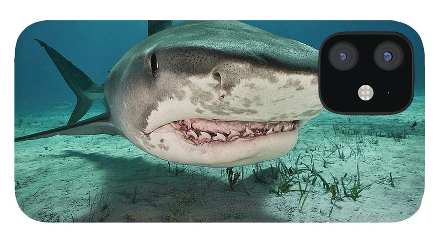 Underwater IPhone 12 Case featuring the photograph Tiger Sharks Galeocerdo Cuvier Are by Rodrigo Friscione