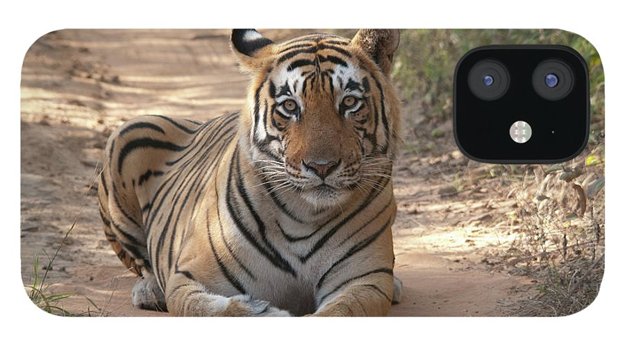 Ranthambore National Park IPhone 12 Case featuring the photograph Tiger Sitting On Field by Chaithanya Krishna Photography