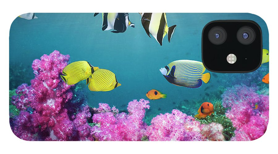 Tranquility IPhone 12 Case featuring the photograph Tropical Reef Fish Over Soft Corals by Georgette Douwma
