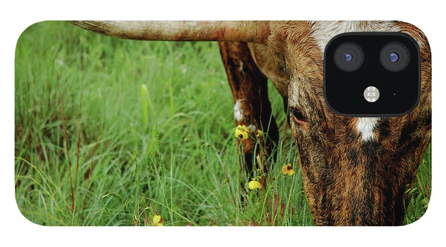 Horned IPhone 12 Case featuring the photograph True Texas Longhorn by Flashpoint