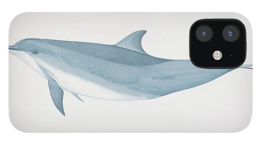 White Background IPhone 12 Case featuring the digital art Tursiops Truncatus, Bottlenose Dolphin by Martin Camm