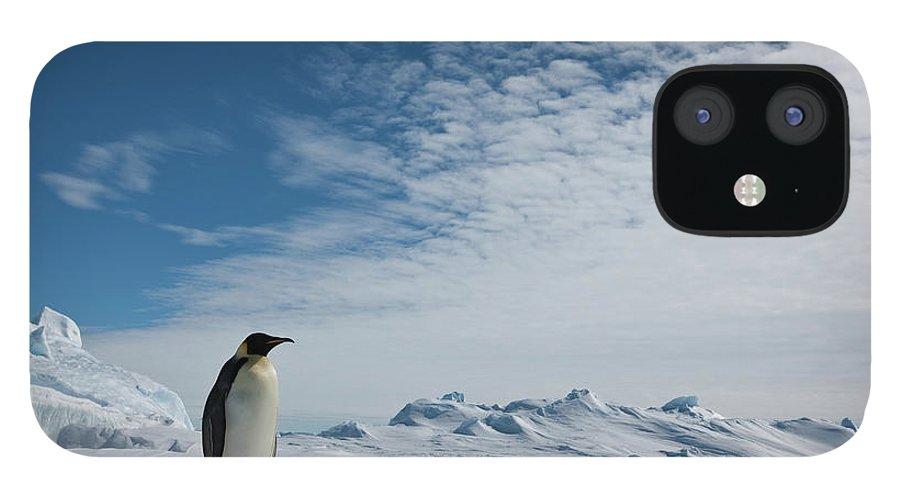 Emperor Penguin iPhone 12 Case featuring the photograph Two Emperor Penguins by A Gandola