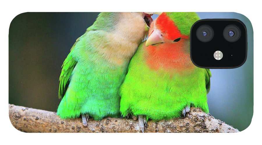 Togetherness IPhone 12 Case featuring the photograph Two Peace-faced Lovebird by Feng Wei Photography