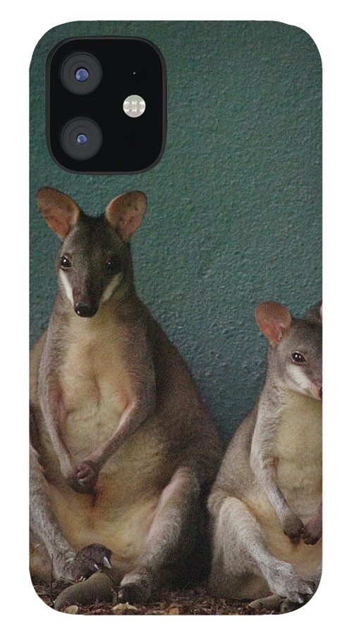 Animal Themes iPhone 12 Case featuring the photograph Two Sitting Wallabies by Ming Thein / Mingthein.com