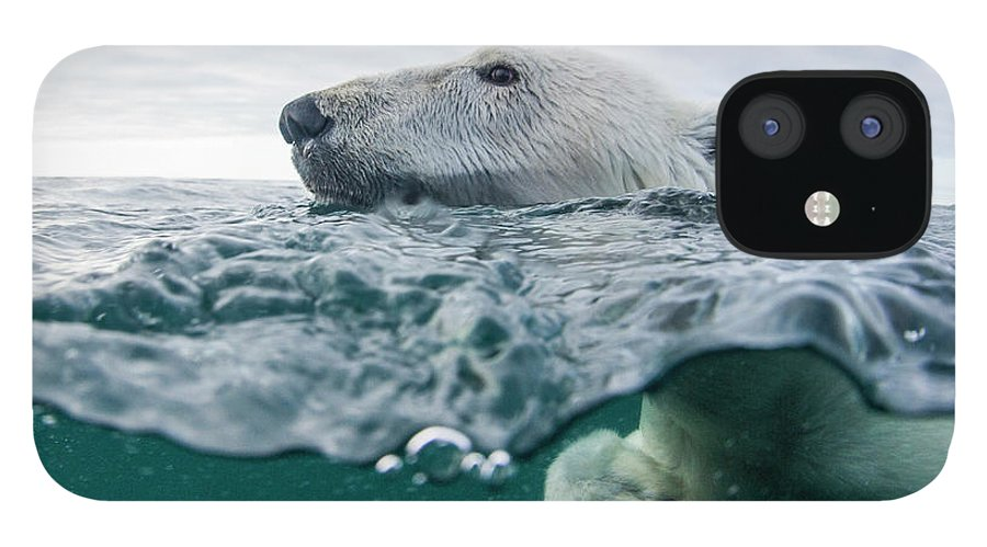 Paw IPhone 12 Case featuring the photograph Underwater Polar Bear In Hudson Bay by Paul Souders