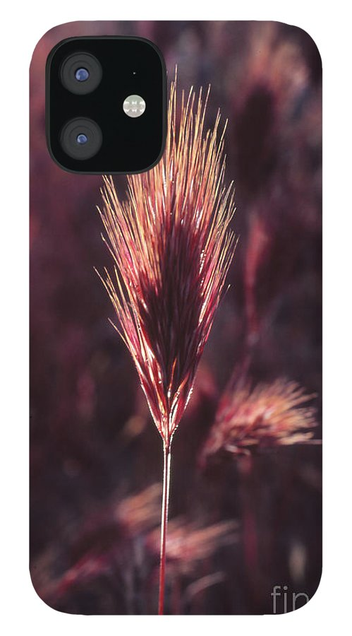 IPhone 12 Case featuring the photograph Untitled by Randy Oberg