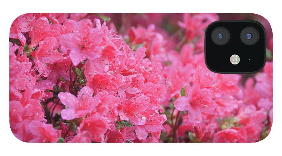 North Carolina IPhone 12 Case featuring the photograph Usa, North Carolina, Asheville, Azalea by Dkar Images