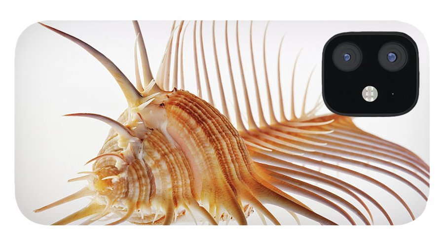 White Background IPhone 12 Case featuring the photograph Venus Comb Murex Shell by Martin Harvey