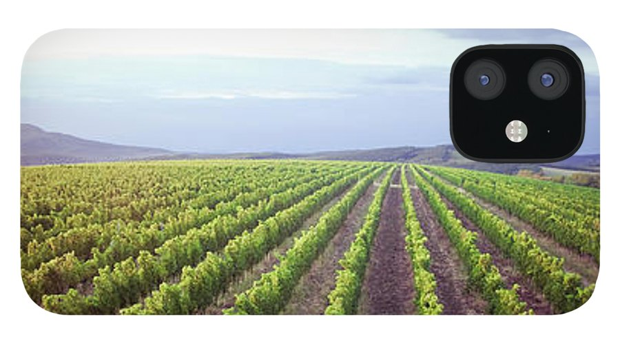 Scenics iPhone 12 Case featuring the photograph Vineyard Panorama Sunrise by Malhrovitz