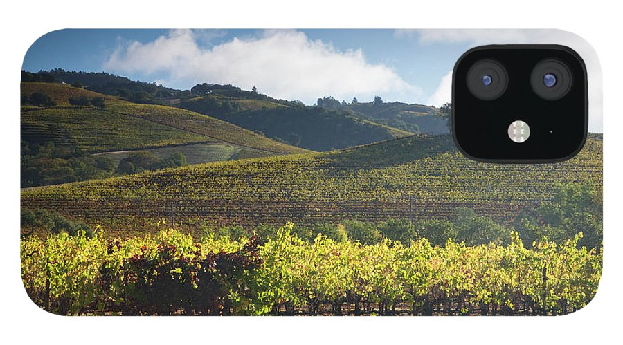Sonoma County IPhone 12 Case featuring the photograph Vineyards Autumn Time In Sonoma Valley by Darrell Gulin