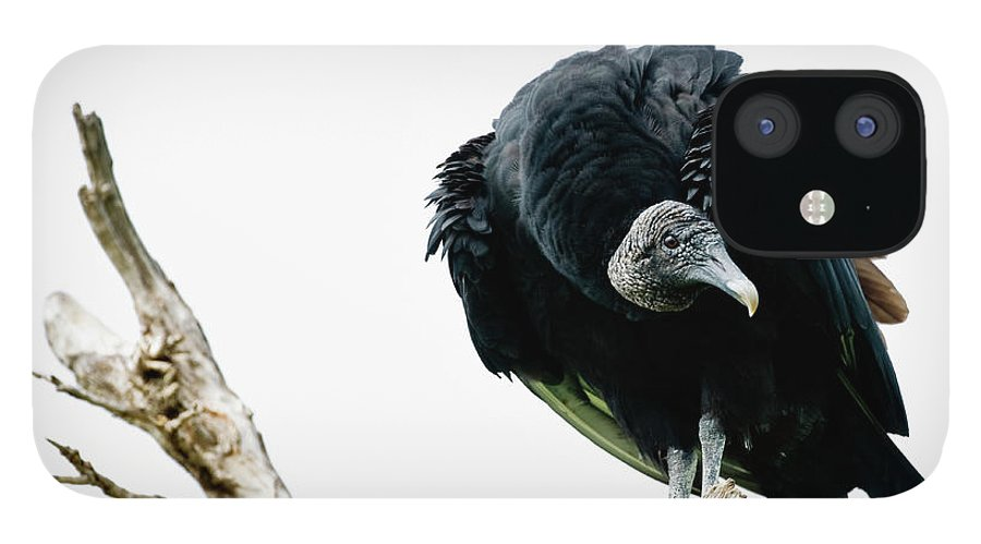 Animal Themes IPhone 12 Case featuring the photograph Vulture Perched On Tree by Roine Magnusson