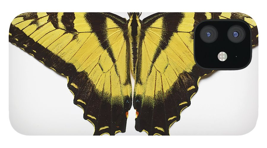 White Background IPhone 12 Case featuring the photograph Western Tiger Swallowtail Butterfly by Don Farrall
