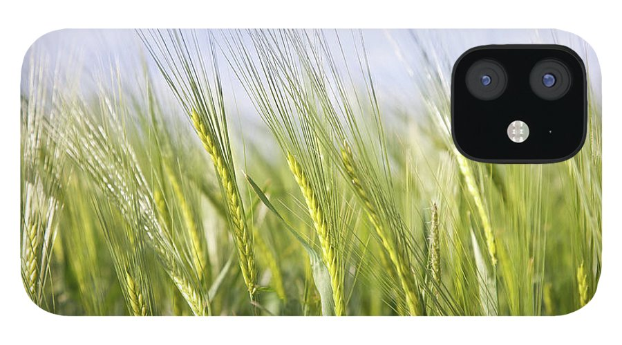 Scenics iPhone 12 Case featuring the photograph Wheat Field by Peter Chadwick Lrps