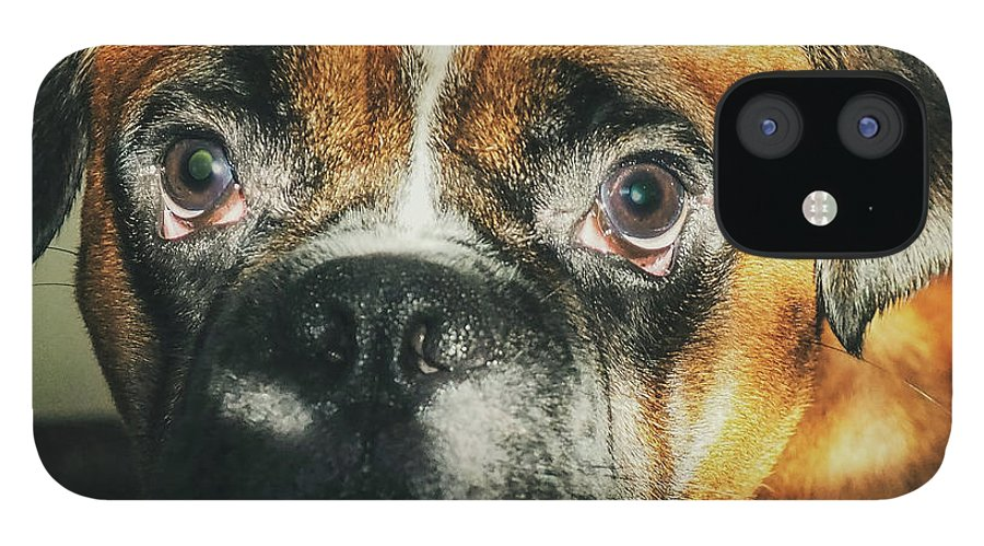 Dog IPhone 12 Case featuring the photograph Where'd Everybody Go by CWinslow Shafer