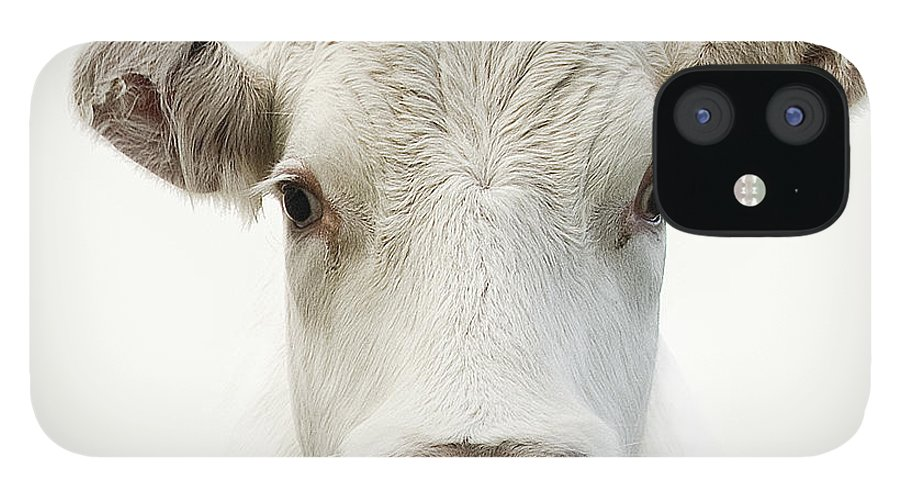 White Background IPhone 12 Case featuring the photograph White Cow by Jojo1 Photography