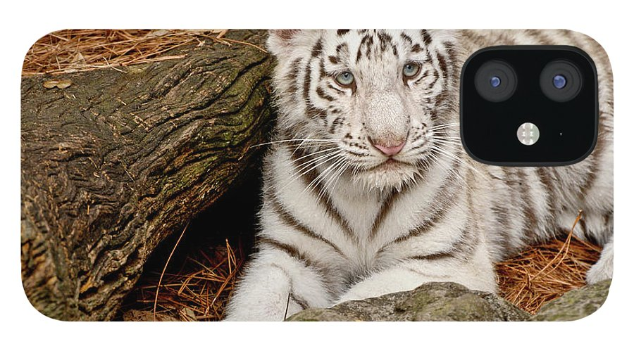 White Tiger IPhone 12 Case featuring the photograph White Tiger Cub by Empphotography
